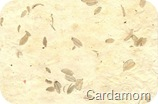 Cardamom Paper